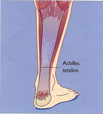 Ankle Procedures Dr-Peter-Smith-Achilles-Tendon