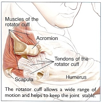 dr-peter-smith-rotator-cuff-muscles